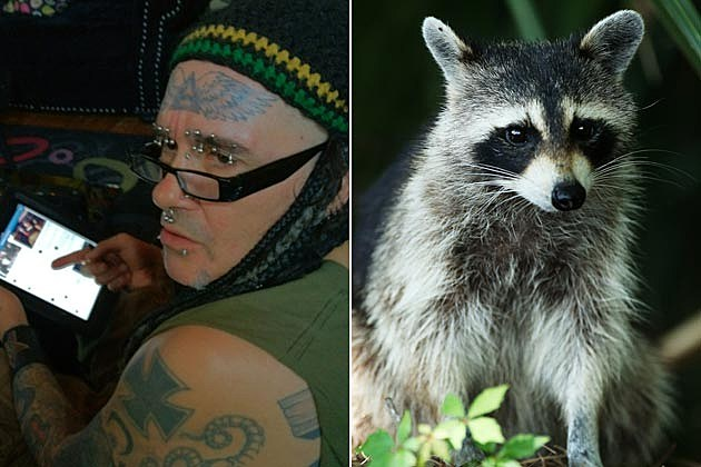 All Jourgensen Raccoon